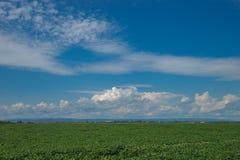 Paysage de jour d'été avec le champ, le ciel nuageux et le village Photos libres de droits
