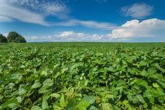 Paysage de jour d'été avec le champ, le ciel nuageux et le village Photographie stock libre de droits