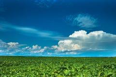 Paysage de jour d'été avec le champ, le ciel nuageux et le village Images libres de droits