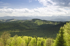 Paysage de jour ensoleillé en montagne de forêt Carpathien, Ukraine images libres de droits