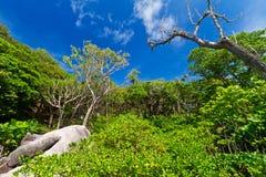 Paysage de jungle des îles de Similan Photographie stock libre de droits