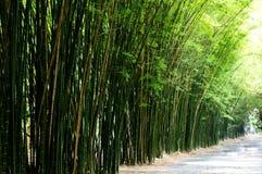 Paysage de l'arbre en bambou dans la forêt tropicale tropicale photo libre de droits