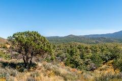 Paysage de l'Arizona Photographie stock