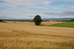 Paysage de l'Ecosse en Angleterre Photographie stock