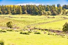 Paysage de l'Ecosse en Angleterre Photographie stock libre de droits