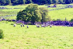 Paysage de l'Ecosse en Angleterre Images libres de droits