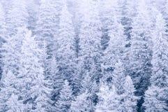 Paysage de l'hiver photos stock