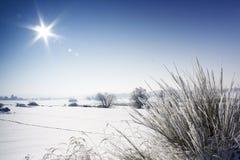 Paysage de l'hiver Photographie stock libre de droits