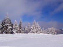 Paysage de l'hiver Images libres de droits