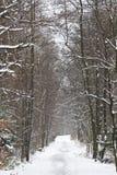 Paysage de l'hiver en Pologne Image libre de droits