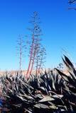 Paysage de la Chypre, épine sauvage et arbres en Chypre de l'Europe photo stock