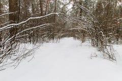 Paysage de la forêt de pin d'hiver couverte de gel principalement aux clo Photo libre de droits