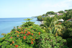 Paysage de la Martinique Photos stock