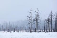 Forêt d'hiver dans un brouillard Photos stock