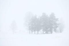 Forêt d'hiver dans un brouillard Photo stock