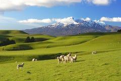 Paysage de la Nouvelle Zélande Photographie stock libre de droits