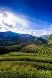 Paysage de la plantation de thé 2000 chez Doi Ang Khang Images stock