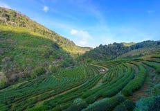Paysage de la plantation de thé 2000 chez Doi Ang Khang Photo stock