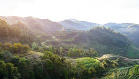 Paysage de la plantation de thé 2000 chez Doi Ang Khang Photo libre de droits
