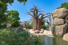 Paysage de la savane africaine photo libre de droits