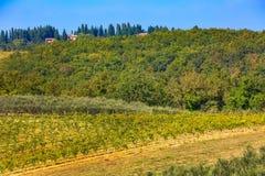 Paysage de la Toscane avec des rang?es de vignobles, Italie images stock