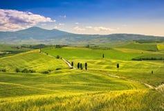 Paysage de la Toscane, route rurale, arbres et champ de blé Crète Sene photographie stock