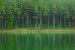Paysage de lac à l'été dans Dalat, Vietnam Image stock