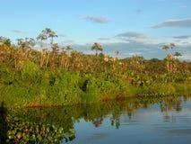 Paysage de lac amazon Photographie stock libre de droits