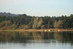 Paysage de lac avec des bateaux images libres de droits