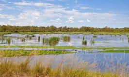 Paysage de lac Bibra : Marécages verts Image libre de droits