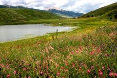 Paysage de lac Sally de carte images libres de droits