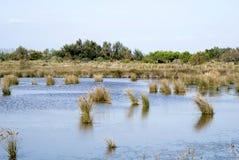 Paysage de lagune de Camargue photographie stock