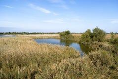 Paysage de lagune de Camargue photo stock