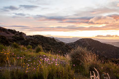 Paysage de lever de soleil de coucher du soleil avec les nuages colorés et les fleurs sauvages Photographie stock libre de droits