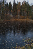 Paysage de marais d'automne photo libre de droits
