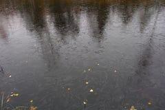 Paysage de marais d'automne Photographie stock