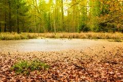 Paysage de marais de forêt Photographie stock