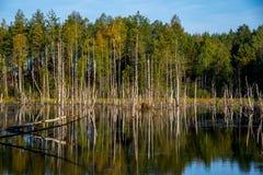 Paysage de marais, lithuanien Image libre de droits