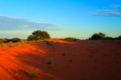 Paysage de matin dans le désert de Kalahari, Keetmanshoop, Namibie Image stock