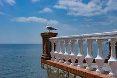 Paysage de mer avec une mouette sur le balcon Images stock