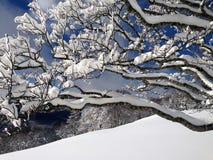 Paysage de Milou avec des arbres, des montagnes et la neige Photographie stock libre de droits
