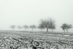 Paysage de Minimalistic avec des arbres dans le domaine sur la brume neigeuse Photographie stock libre de droits