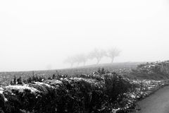 Paysage de Minimalistic avec des arbres dans le domaine sur la brume neigeuse Images stock