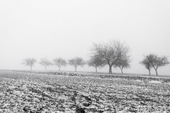 Paysage de Minimalistic avec des arbres dans le domaine sur la brume neigeuse Image stock