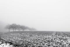 Paysage de Minimalistic avec des arbres dans le domaine sur la brume neigeuse Photo stock