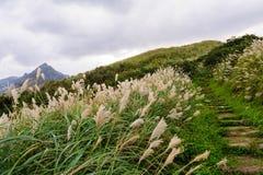 Paysage de montagne à Taïpeh Image libre de droits