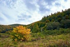 Paysage de montagne avec des nuages et des arbres colorés Image libre de droits