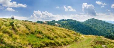 Paysage de montagne avec des vaches sur le pâturage dans le Mounta carpathien photos libres de droits
