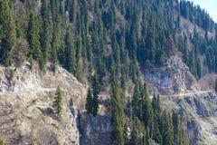 Paysage de montagne avec la forêt colorée et les crêtes couronnées de neige élevées jour étonnant de montagnes de Caucase du beau Photographie stock libre de droits
