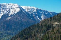 Paysage de montagne avec la forêt colorée et les crêtes couronnées de neige élevées jour étonnant de montagnes de Caucase du beau Image libre de droits